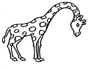 Дикие животные картинки раскраски (7)