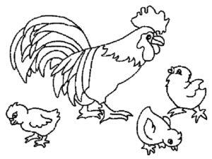 Домашние птицы и их птенцы картинки раскраски (1)