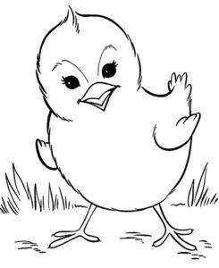 Домашние птицы и их птенцы картинки раскраски (10)