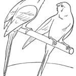 Домашние птицы и их птенцы картинки раскраски (11)