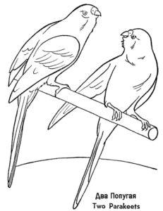 -птицы-и-их-птенцы-картинки-раскраски-11-231x300 Птицы