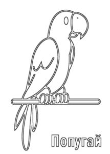 Домашние птицы и их птенцы картинки раскраски (12)