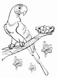 -птицы-и-их-птенцы-картинки-раскраски-13-218x300 Птицы
