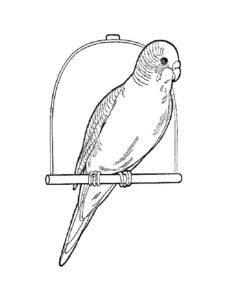 Домашние птицы и их птенцы картинки раскраски (15)