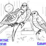 Домашние птицы и их птенцы картинки раскраски (17)