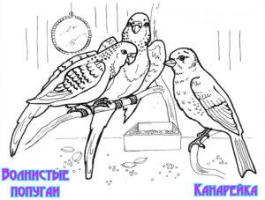 -птицы-и-их-птенцы-картинки-раскраски-17-300x227 Птицы