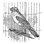 Домашние птицы и их птенцы картинки раскраски (18)