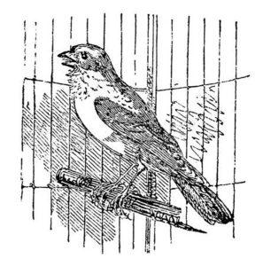 -птицы-и-их-птенцы-картинки-раскраски-18-297x300 Птицы