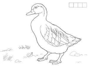 Домашние птицы и их птенцы картинки раскраски (19)