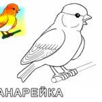 Домашние птицы и их птенцы картинки раскраски (21)
