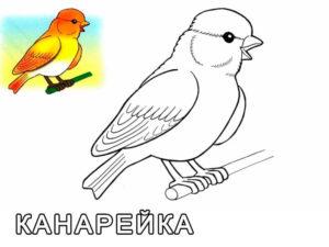 -птицы-и-их-птенцы-картинки-раскраски-21-300x225 Птицы