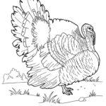 Домашние птицы и их птенцы картинки раскраски (22)