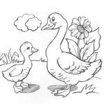 Домашние птицы и их птенцы картинки раскраски (24)