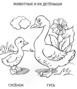 -птицы-и-их-птенцы-картинки-раскраски-24-258x300 Птицы