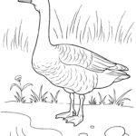 Домашние птицы и их птенцы картинки раскраски (25)