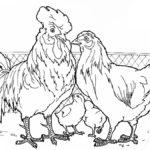 Домашние птицы и их птенцы картинки раскраски (3)