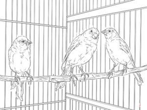 -птицы-и-их-птенцы-картинки-раскраски-4-300x225 Птицы