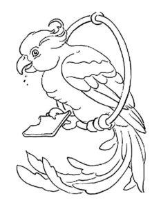 Домашние птицы и их птенцы картинки раскраски (7)