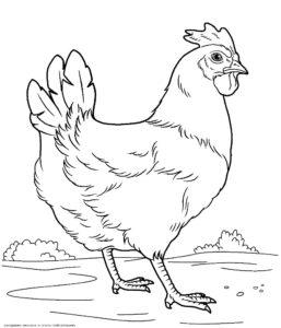 Домашние птицы и их птенцы картинки раскраски (8)