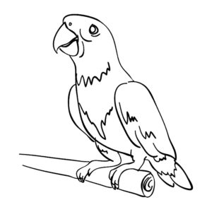 Домашние птицы и их птенцы картинки раскраски (9)