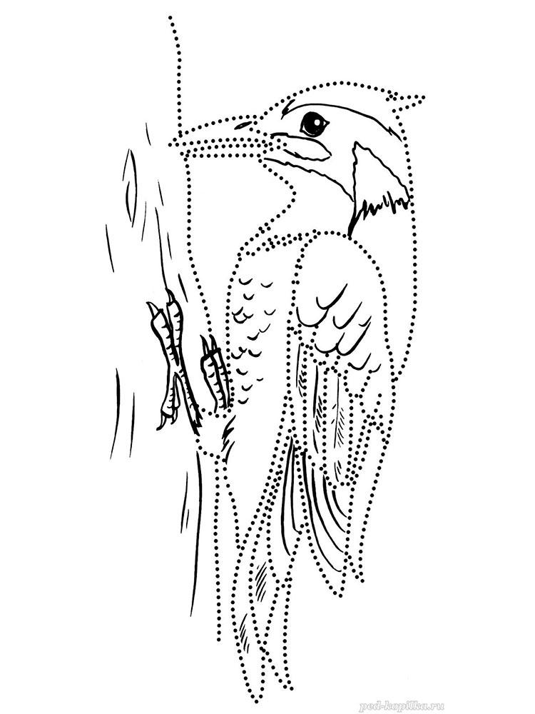 отдельная картинки раскраски птиц дятел тепла модель выполнена