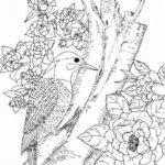 Дятел картинки раскраски (10)
