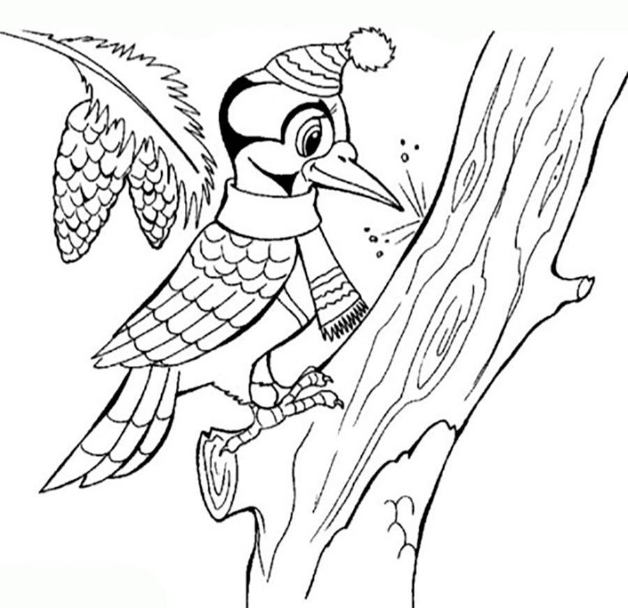 картинки раскраски птиц дятел заповедного леса