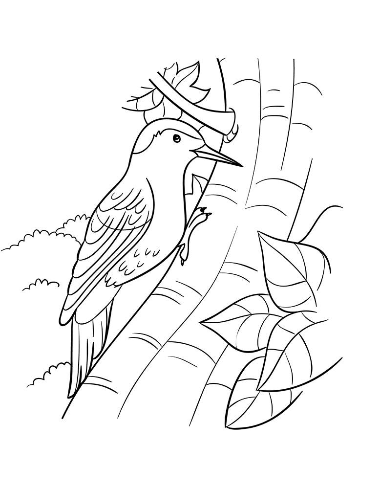 картинки раскраски птиц дятел