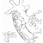 Жираф картинки раскраски (1)