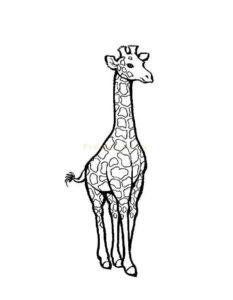 Жираф картинки раскраски (2)