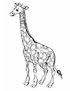 Жираф картинки раскраски (9)