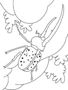 Жук картинки раскраски (33)