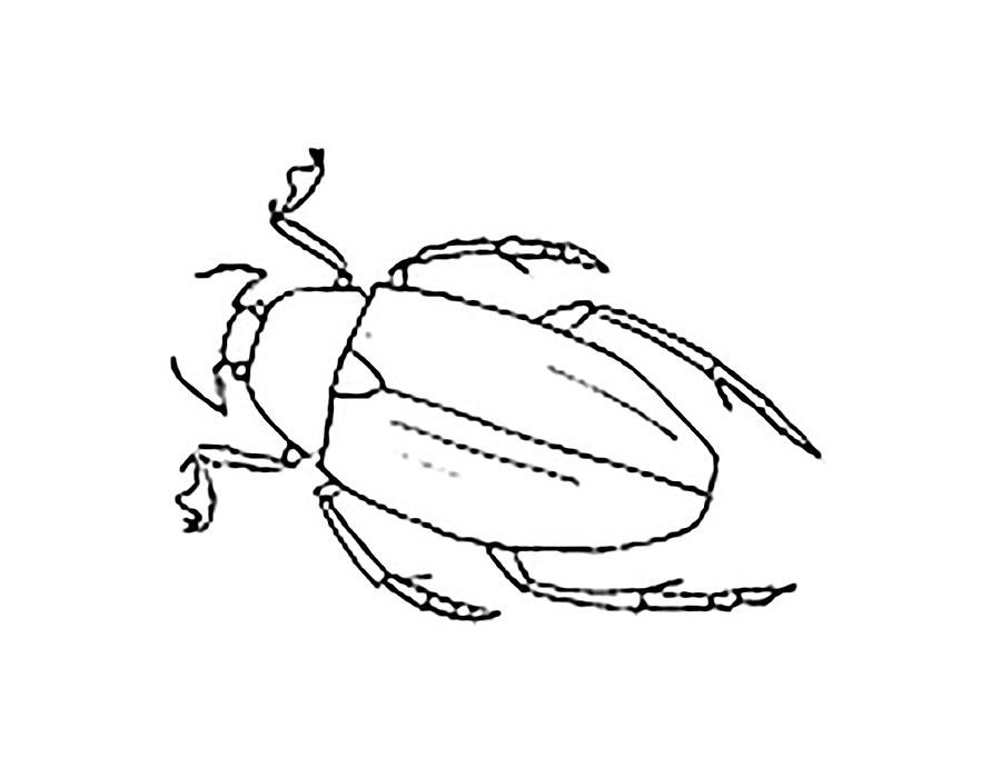 Жуки картинки раскраска
