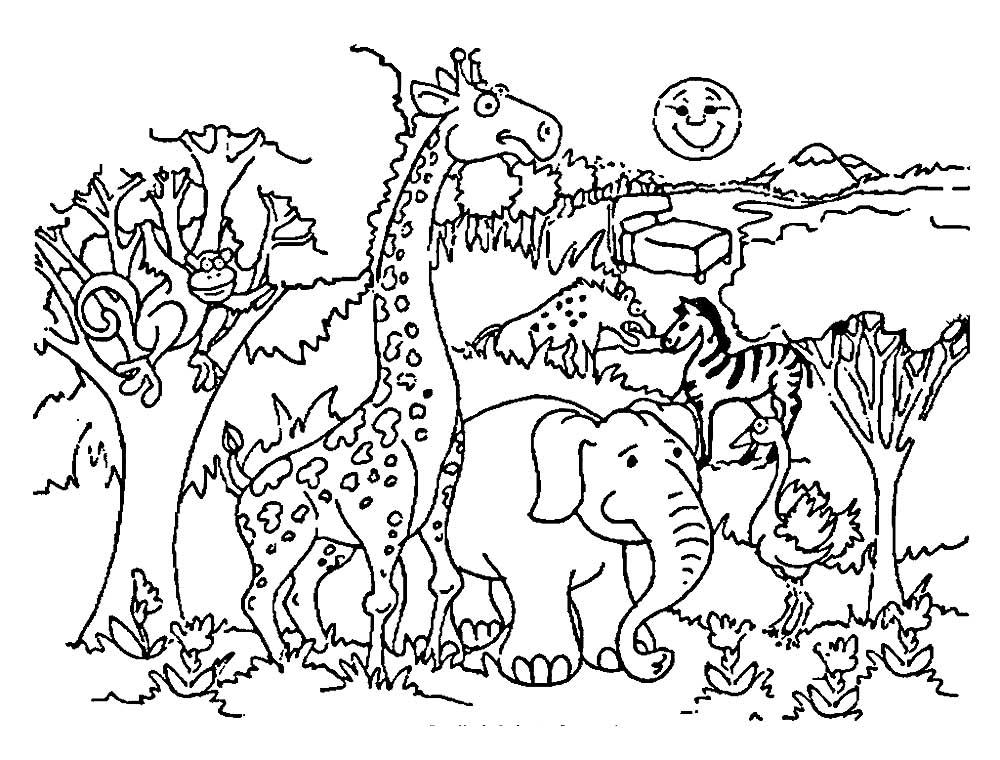 Картинки животного мира раскраски