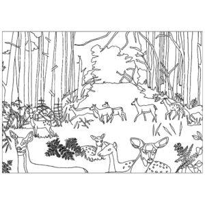 Раскраски лес