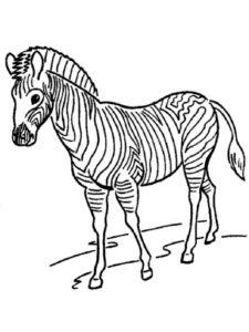 Зебра картинки раскраски (1)