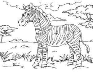 Зебра картинки раскраски (10)