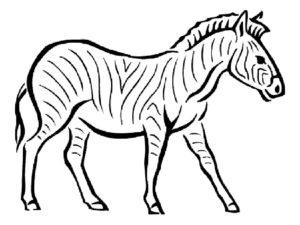 Зебра картинки раскраски (12)