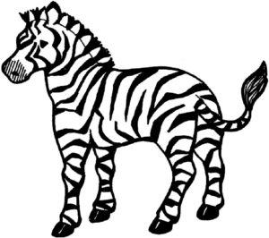 Зебра картинки раскраски (13)
