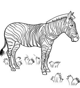 Зебра картинки раскраски (14)