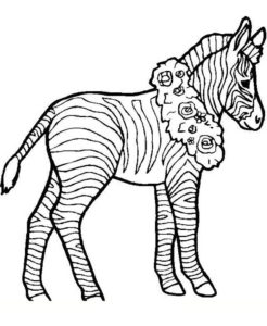Зебра картинки раскраски (17)