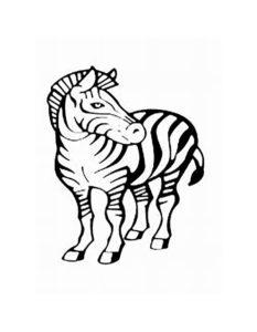 Зебра картинки раскраски (18)