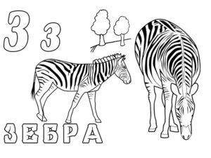 Зебра картинки раскраски (20)