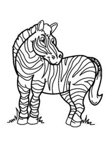 Зебра картинки раскраски (22)