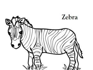 Зебра картинки раскраски (24)