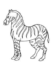 Зебра картинки раскраски (25)