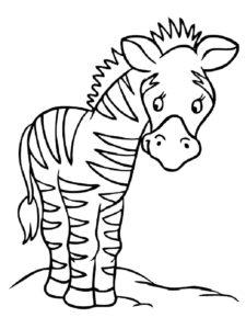 Зебра картинки раскраски (6)