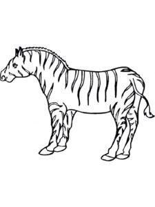 Зебра картинки раскраски (9)
