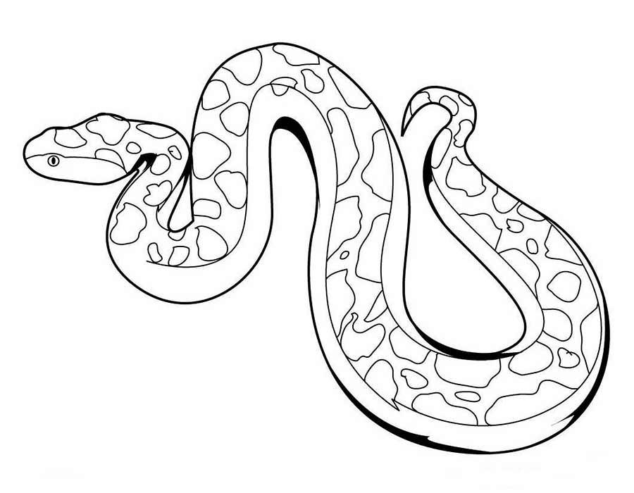 Змеи картинки раскраски (11)