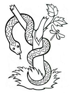 Змеи картинки раскраски (25)